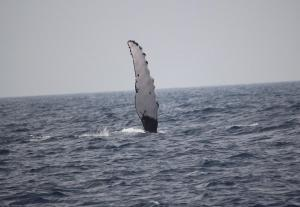 Whale Wave