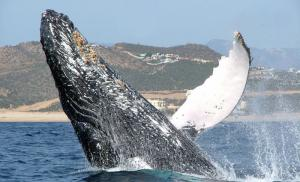 Whale Watch  Picture